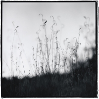 Big Bend Grasses