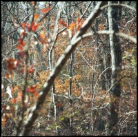 fall-woods-at-pine-mtn-2