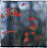red-leaves-1