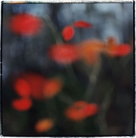 red-leaves-4