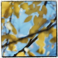 yellow-leaves-on-mclendon