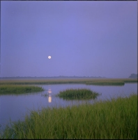 moonset-over-marsh