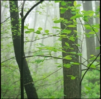 spicebush-light-rain